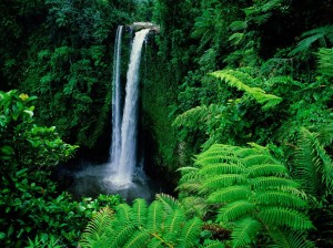 rainforest-rainforest-32472978-1024-768