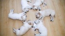 cutest-circle-ever